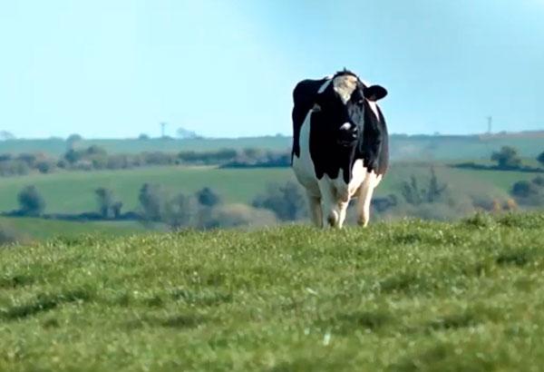 Con la leche de pasto, ¡tu futuro es la leche!
